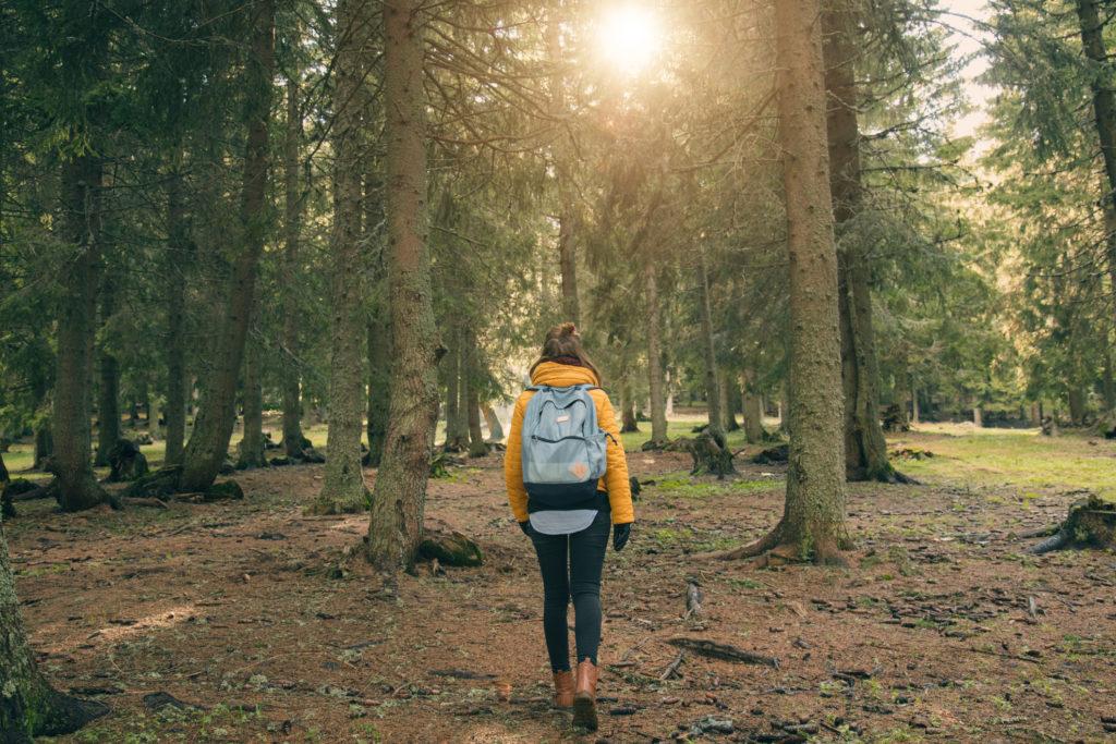 Baños de bosque, beneficios de la naturaleza